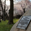 Title: Cherry Tree Plaque<br /> Date: March 2008