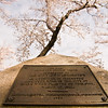 Title: Plaque Under the Blossoms<br /> Date: March 2011