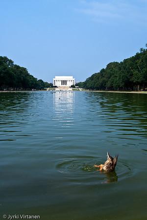 Reflecting Pool - Washington, DC, USA