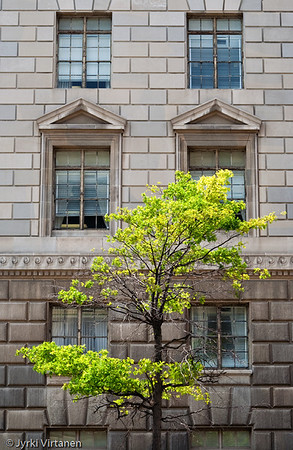 Green Tree - Washington, DC, USA