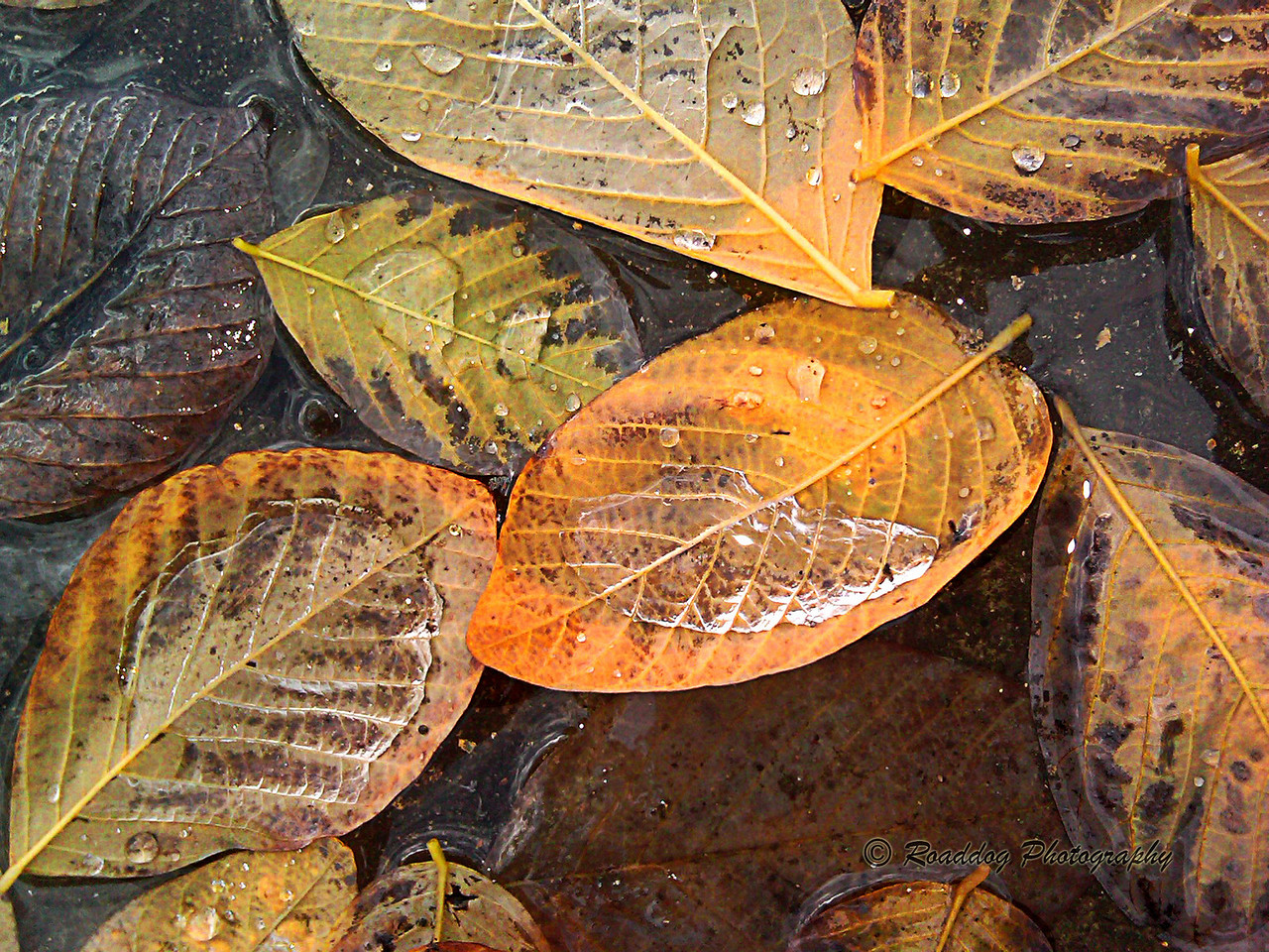Autumn Rains #2<br /> <br /> Cell phone image captured on a walk between my office and shop.