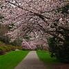 Stroll thru the arboretum.