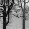 Snow trees,vinyards