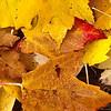 20131023_101807_Richtone(HDR)-2