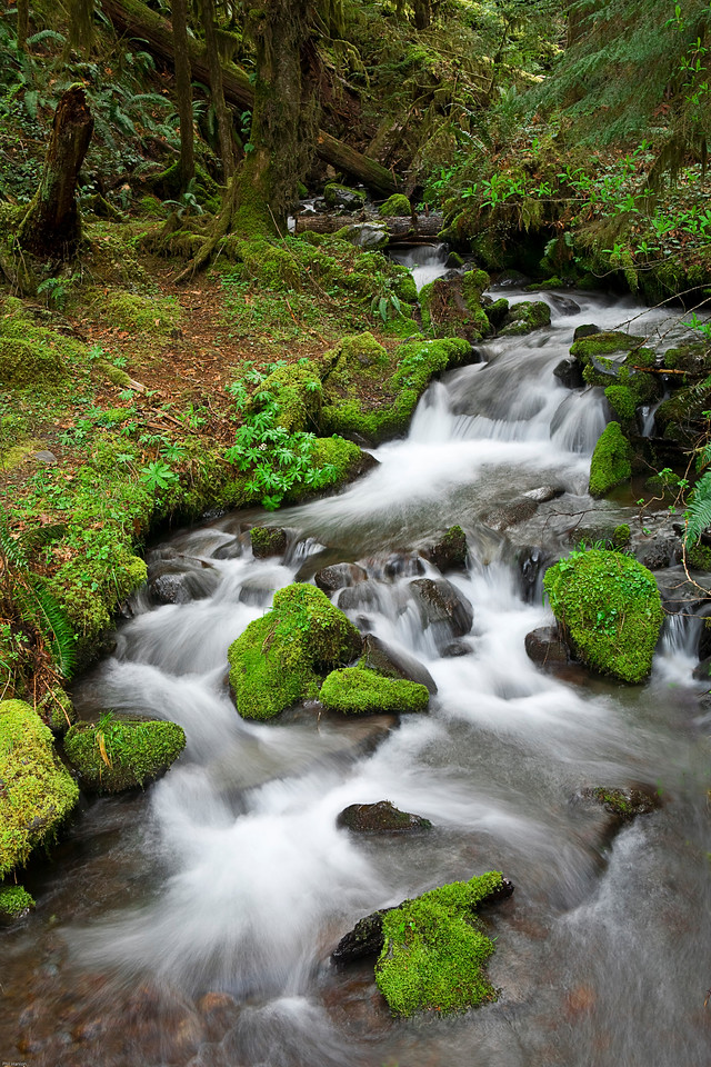 Spring snowmelt in the Olympic National Park