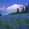 Mt Rainier at Sunrise