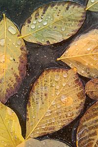 Autumn Rains 3