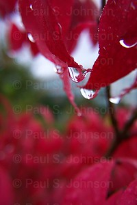 Drops_On_Leaves_1