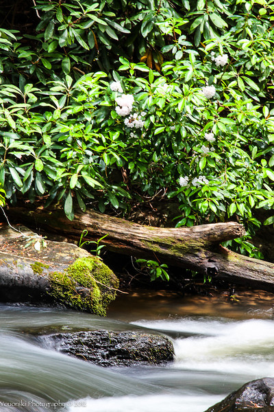 Turtle Town Falls, NC 2011