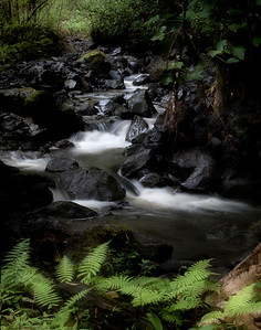 Rock, Stream and Fern