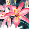 "Blushing   original watercolor available, matted 16""x20 (NOT framed) painting 12""x16"", $275.00"