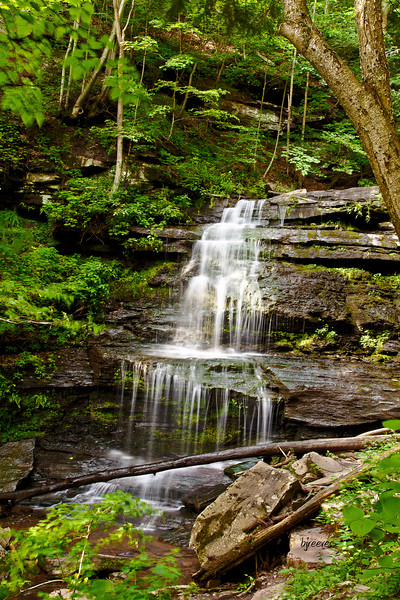 Waterfall in Leonard Harrison State Park in PA. Known as the Grand Canyon of PA.