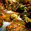 Western NC Fall colors_10-15-12_0058