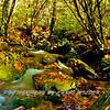 Western NC Fall colors_10-15-12_0050