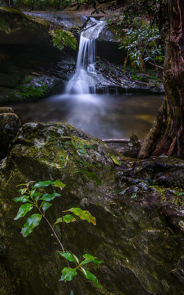 Looking in to Upper Fairy Bower Falls
