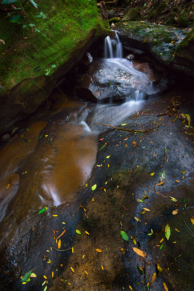 Autumn Leaves at Dimmocks Creek