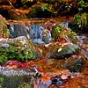 Western NC Fall colors_10-15-12_0057