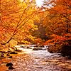 Western NC Fall colors_10-15-12_0048