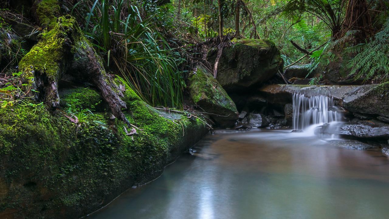 Dimmocks Feeder Creek