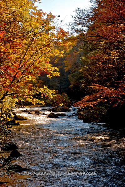 Western NC Fall colors_10-15-12_0047