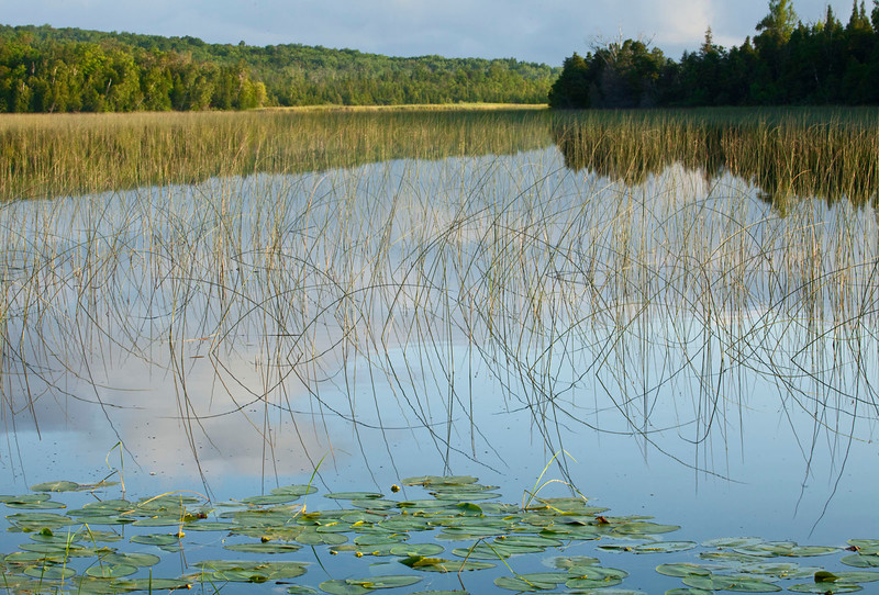 Lilypads with reeds and sky reflections, Wisconsin