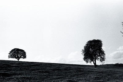 Lonely Trees, The Republic of Ireland  The symbol '©' on the photos DOES NOT PRINT.