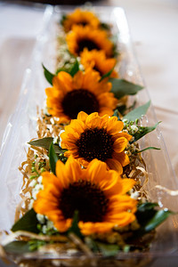 Sunflower-0021