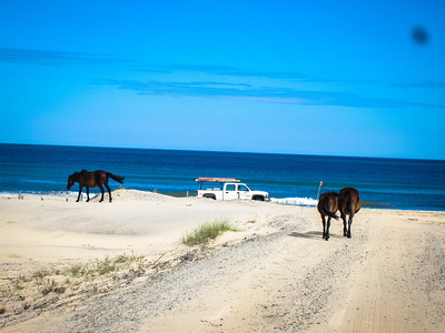 Horses in the road © Rachel Rubin 2012