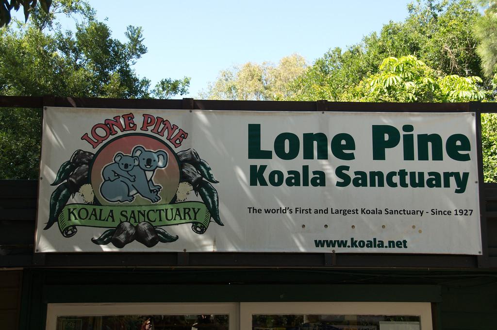Lone_Pine_Koala-12262011_0033