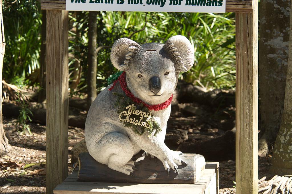 Lone_Pine_Koala-12262011_0034