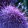 Purple, 2009<br /> Digital Photography