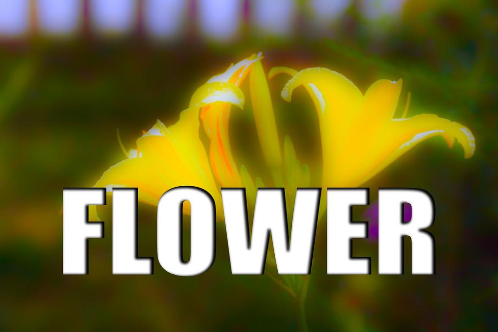 WEEK 45 - FLOWER