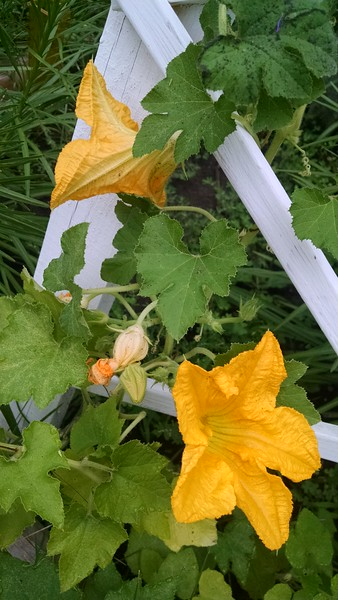 WEEK 45 - FLOWER - SHANNON BARDOLE