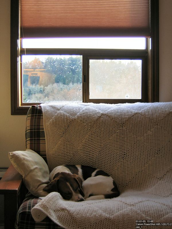 Rainy New Year's Day -- Tucker had the right idea.