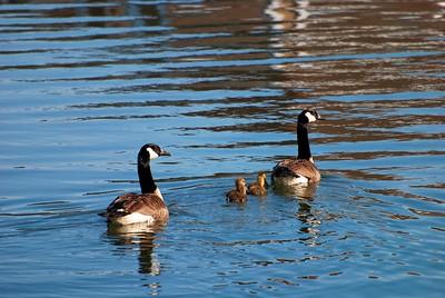 Smith Mountain Lake, Virginia USA