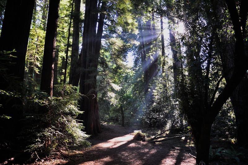 Muir Woods National Monument, California USA