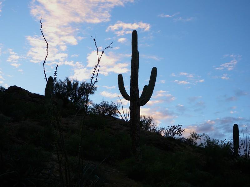 Saguaro National Park, Tuscan, Arizona USA