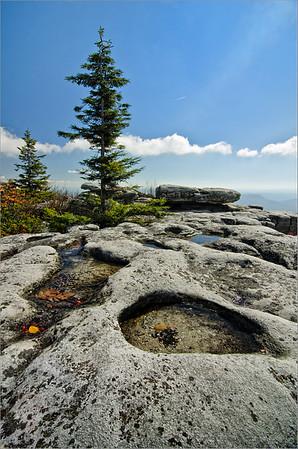 Dolly Sods Rocks
