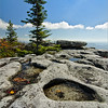 Dolly Sods Rocks