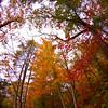 Western NC Fall colors_10-13-12_0035
