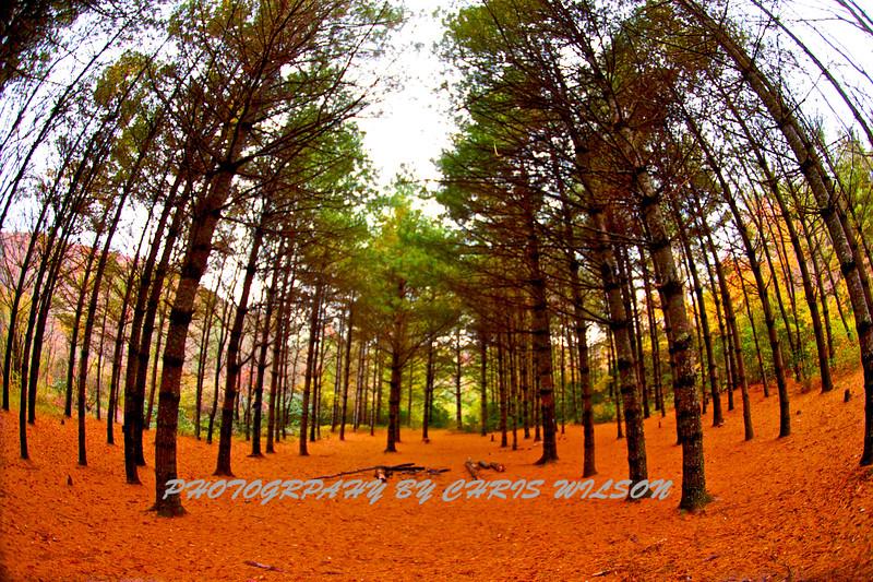 Western NC Fall colors_10-12-12_0018
