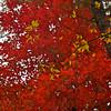 Western NC Fall colors_10-13-12_0041