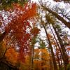 Western NC Fall colors_10-13-12_0042