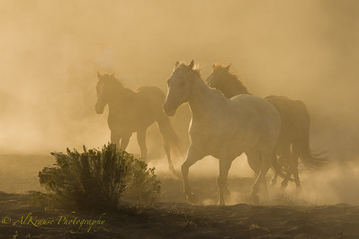 Western Photography