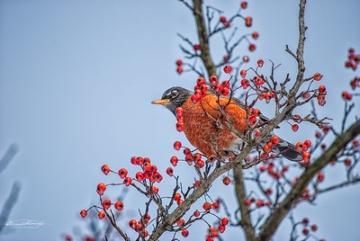 Mr Robin Takes a Rest