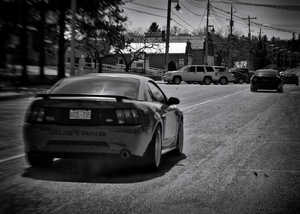 Mustang, St. Joe's Island, Ontario