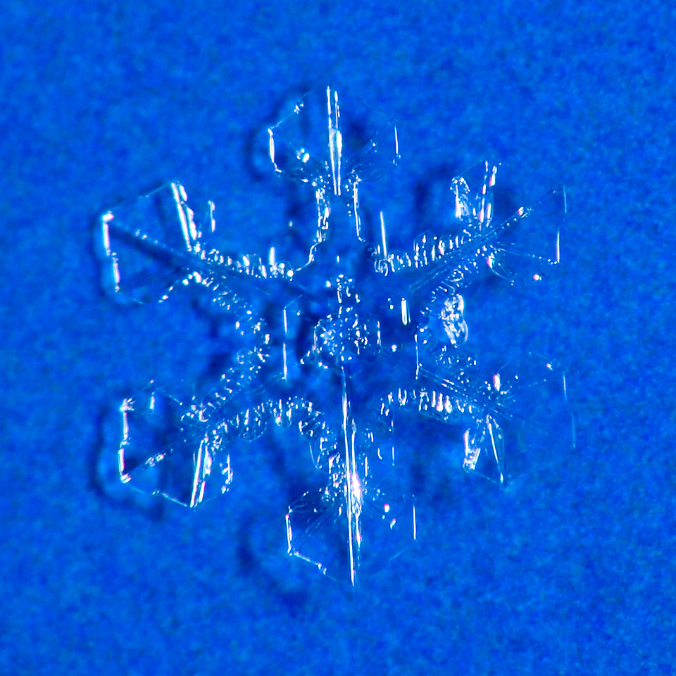 First attempt at photographing snowflakes.  70-300mm lens mounted on camera with a 60mm stacked and reversed.  SB-800 flash off camera.
