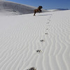 He frolicked like a puppy...or a gazelle.  Super happy guy.<br /> White Sands National Monument, New Mexico. <br /> January 9, 2013<br /> White gypsum sand dunes unlike any in the world...