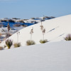 WS0541  White Sands New Mexico, New Mexico, White Sands National Monument, desert , white sand