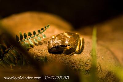 Frog doing meditation!!